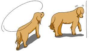 老犬の「認知症」について